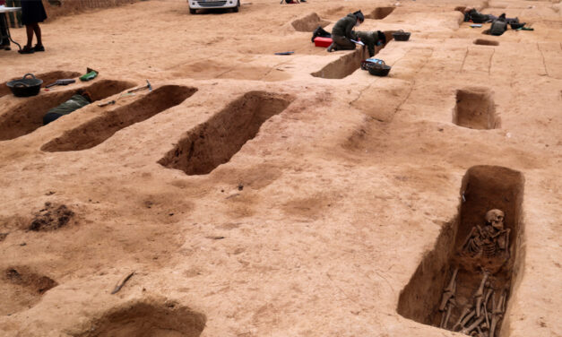 Les excavacions a la fossa del Mas de Santa Magdalena de Móra d'Ebre han permès recuperar 54 individus